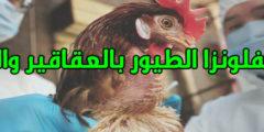 علاج انفلونزا الطيور في الصين وطرق الوقاية