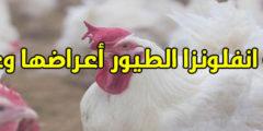 طرق علاج انفلونزا الطيور بالاعشاب وطبياً والوقاية