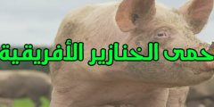 حمى الخنازير الأفريقية الوقاية منها وما أعراضها