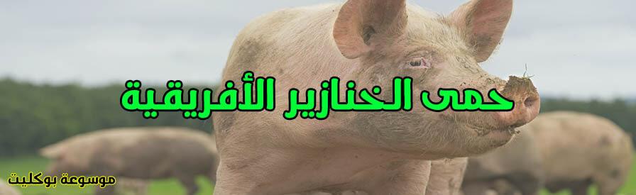 حمى الخنازير الأفريقية أسبابها وأعراضها وطرق الوقايه منها