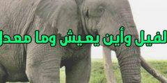 ما هو الفيل وأين يعيش وما هو معدل عمره معلومات كاملة