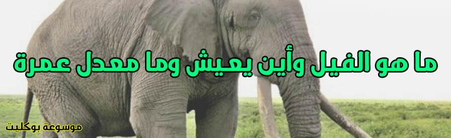 ما هو الفيل وأين يعيش وما هو معدل عمر معلومات كاملة