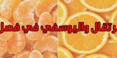 فوائد البرتقال واليوسفي في فصل الشتاء وأضرارهما