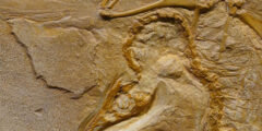 أسباب إنقراض الحيوانات في العصور القديمة والحديثة