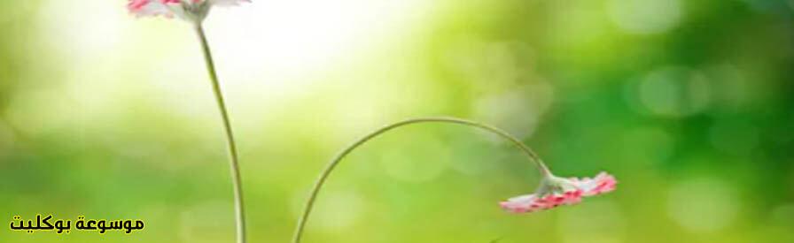 أدوية التسرب الوريدى للعضو الذكرى