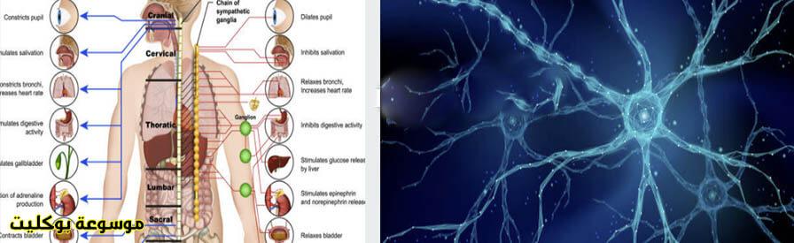 أحدث طرق علاج تلف الأعصاب الحركية واللاإرادية والحسية