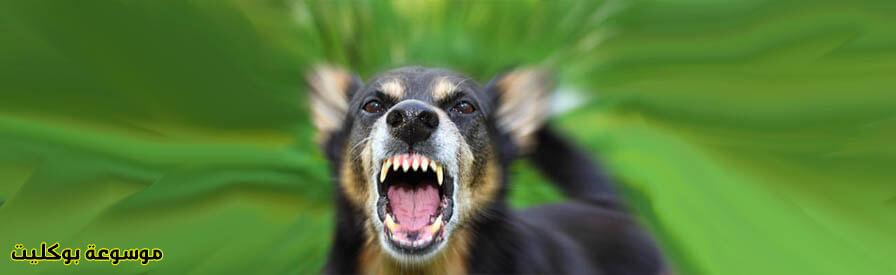 تفسير كلب يعضني في الحلم لابن سيرين